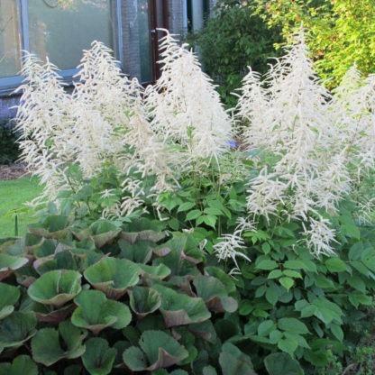 Bijen en nectar planten