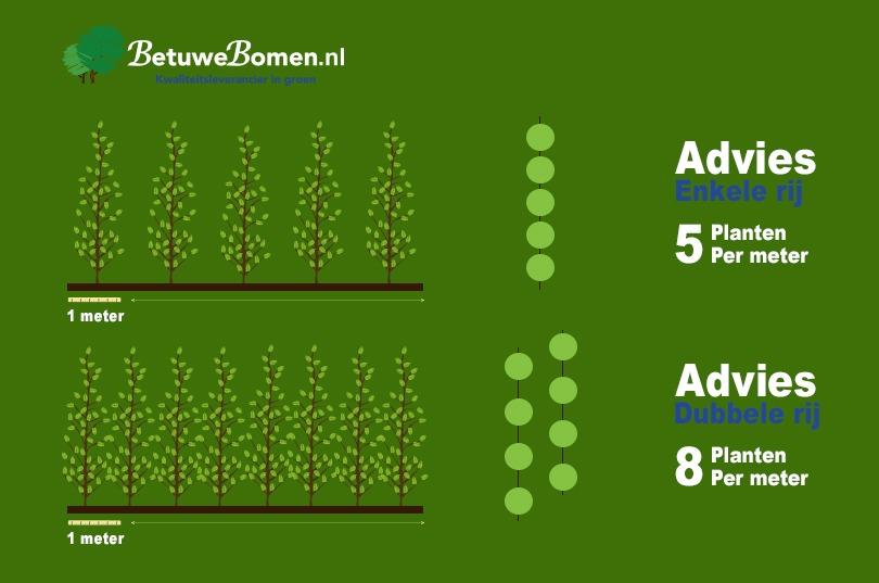haagplanten per meter