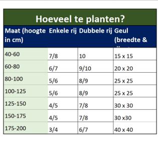 Hoeveel beukenhagen planten