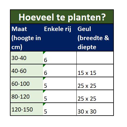 Hoeveel liguster planten