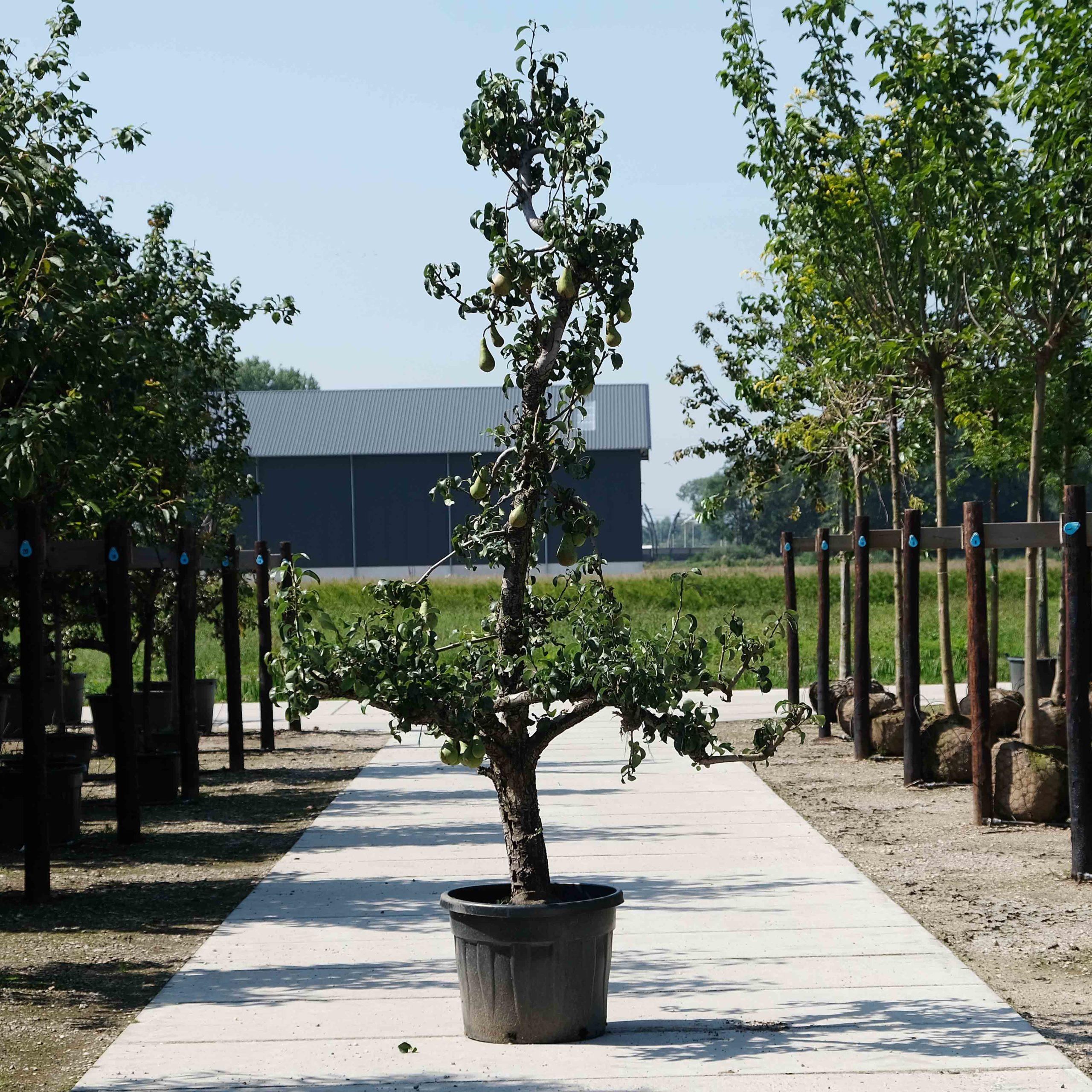 Fruitbomen soorten