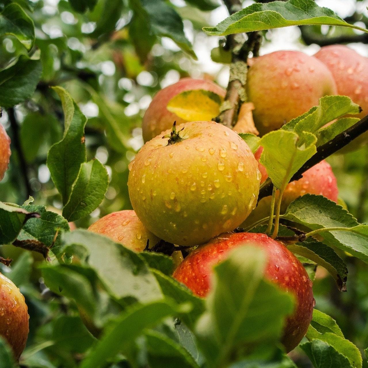 Fruit plukken