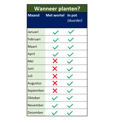 Wanneer liguster planten