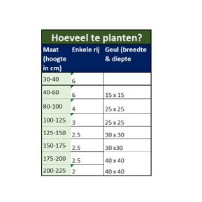 hoeveel taxus planten