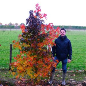 Meerstammige boom