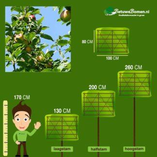 lei appelboom goudreinet