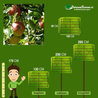 appelboom leivorm