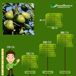 lei perenboom doyenne
